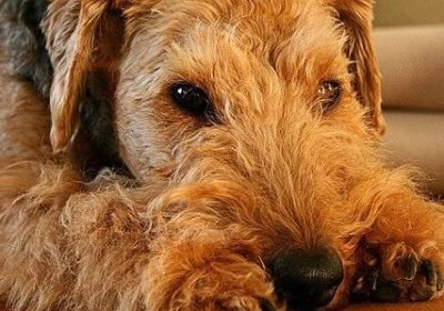 #airdaletraining #bestdogtrainerboulder #bestdogtrainingboulder