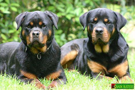 #largedogtraining #dogbehaviorboulder #dogtrainersboulder