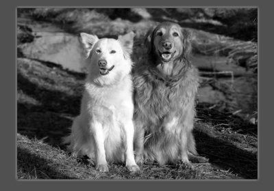 #dogsofbarkbusters #goldenretrievertraining #bestdogtraininglafayette