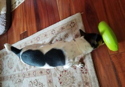 #gamechanger #barkbusterslousiville #bestdogtraininglouisville