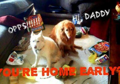 #stopbarking #dogsmisbehaving #dogtrainingboulder #bestdogtrainingboulder